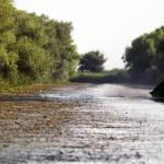 Calatorie in Delta Dunarii